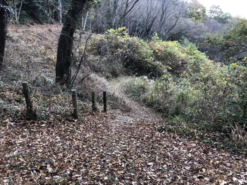 日の出野鳥の森続28