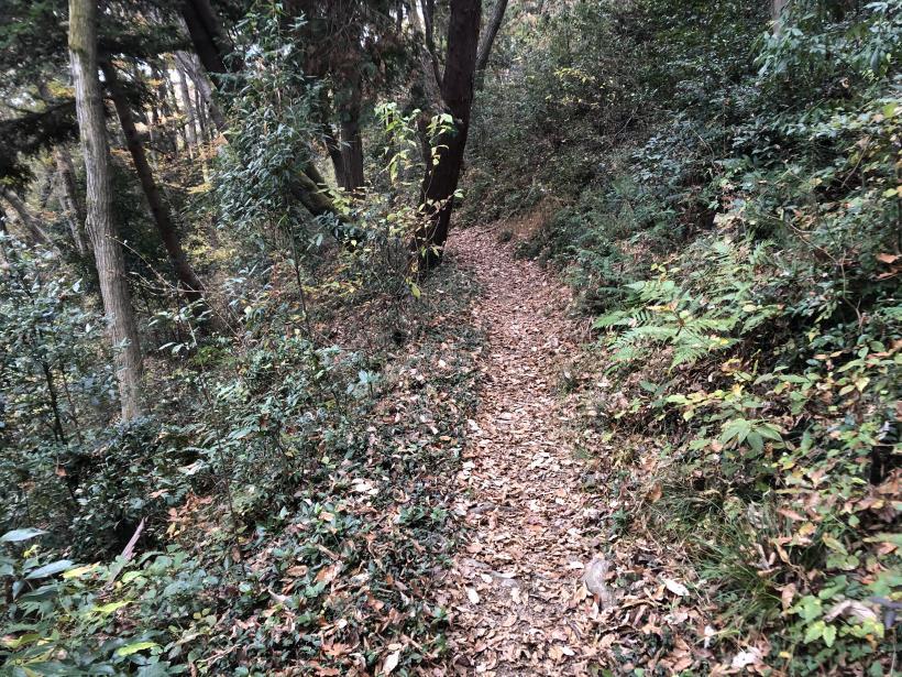 日の出野鳥の森続37