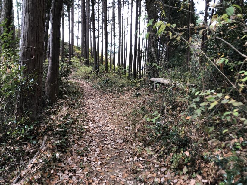 日の出野鳥の森続38