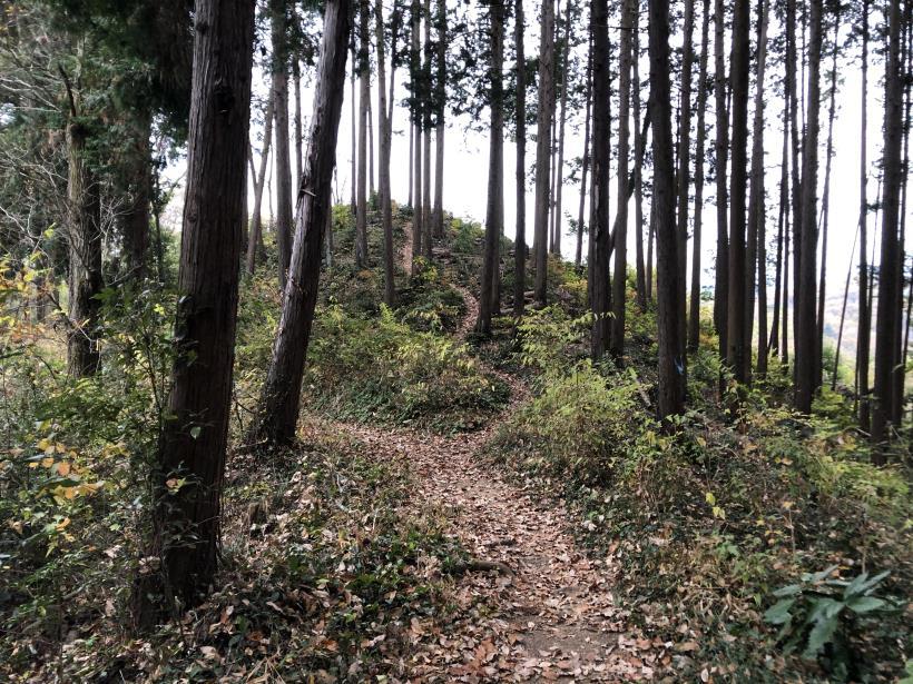 日の出野鳥の森続39