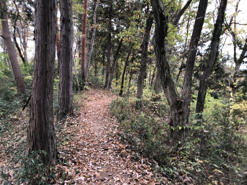 日の出野鳥の森続43