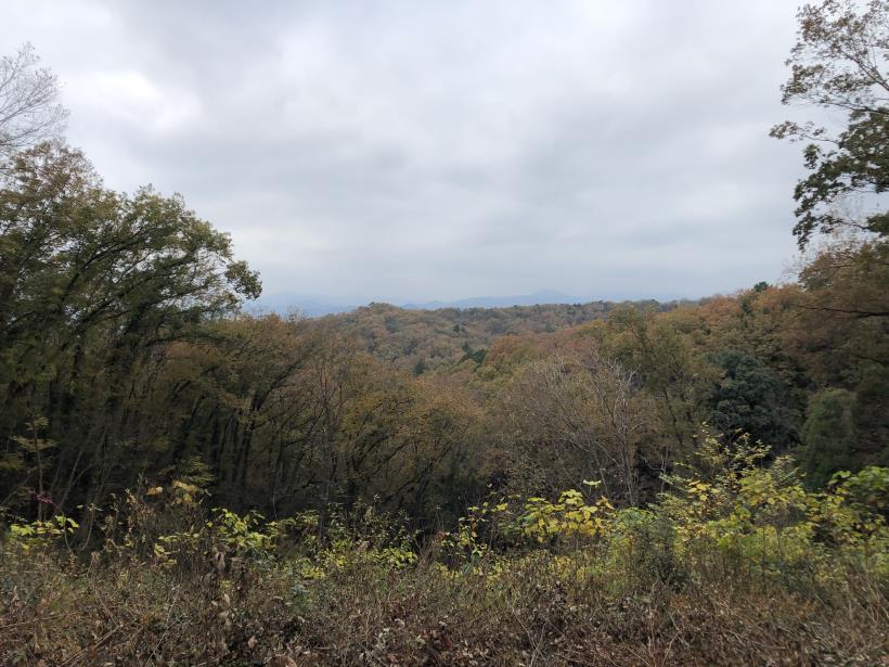 日の出野鳥の森続45