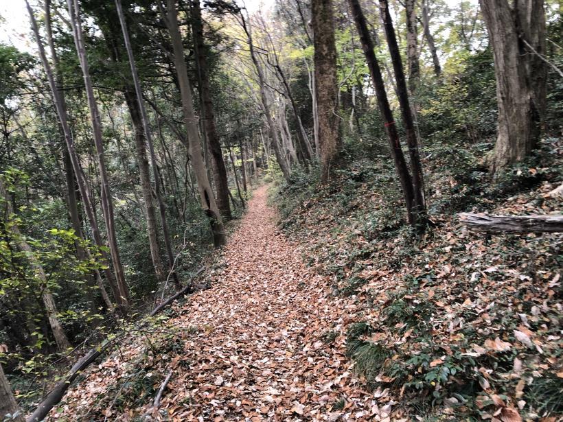 日の出野鳥の森続48