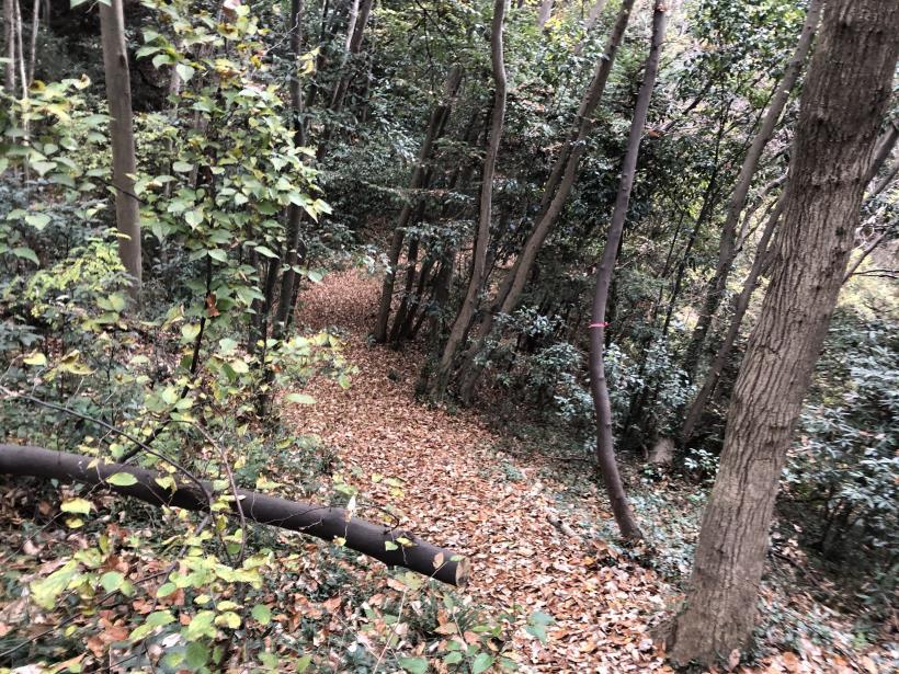 日の出野鳥の森続49