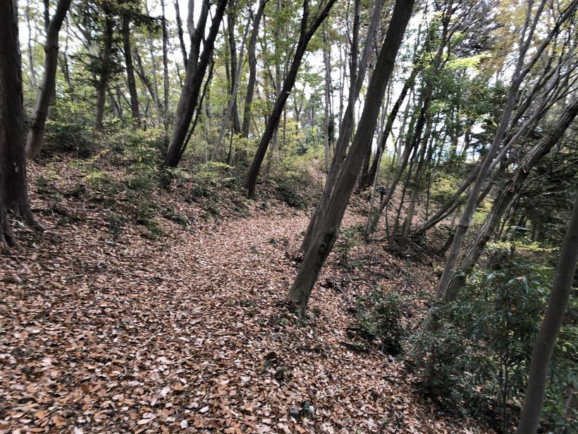 日の出野鳥の森続51