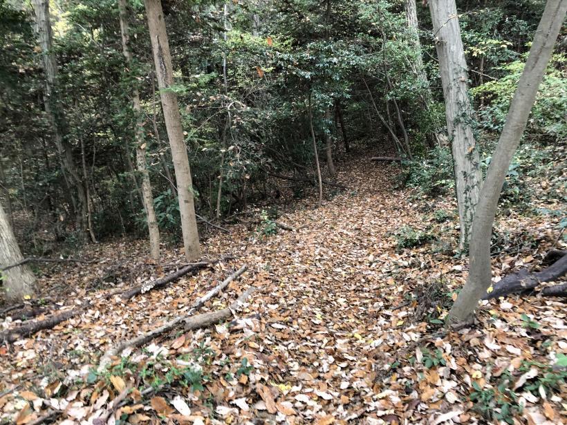 日の出野鳥の森続53
