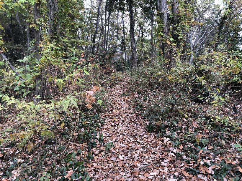 日の出野鳥の森続57