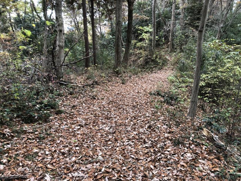 日の出野鳥の森続60