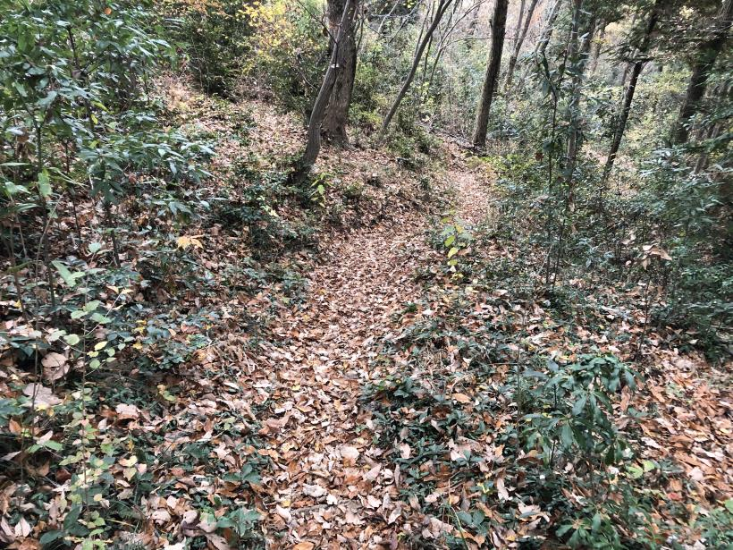 日の出野鳥の森続70