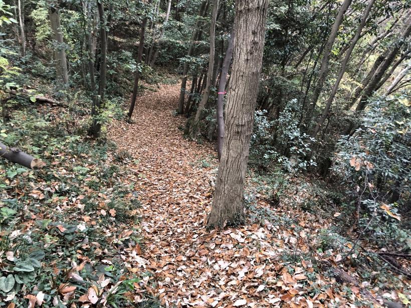 日の出野鳥の森続74