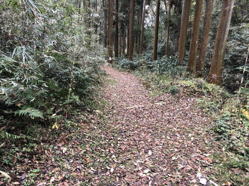 日の出野鳥の森続75