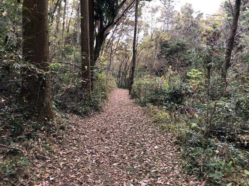 日の出野鳥の森続76