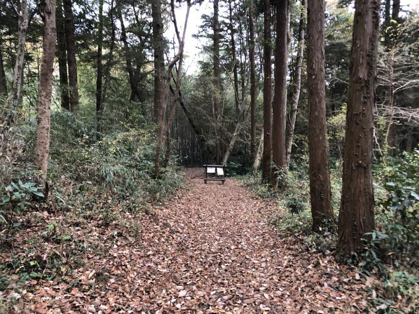 日の出野鳥の森続77