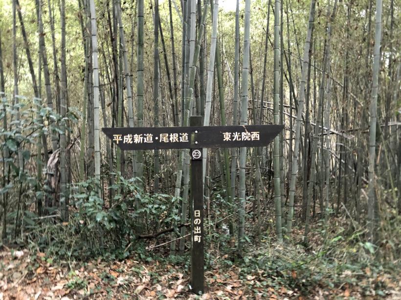 日の出野鳥の森続79