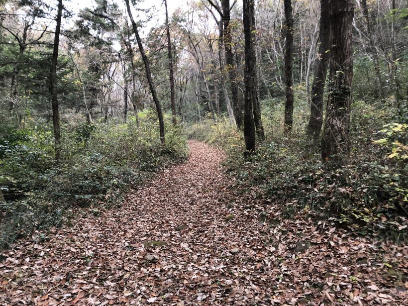 日の出野鳥の森続83