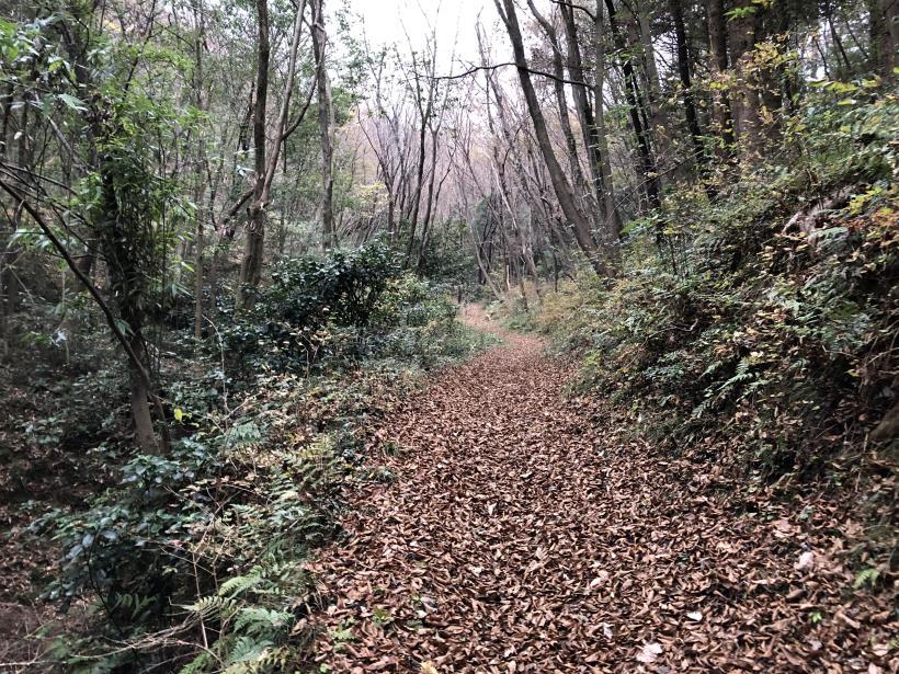 日の出野鳥の森続87