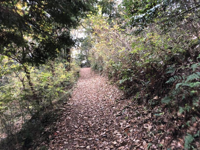 日の出野鳥の森続96