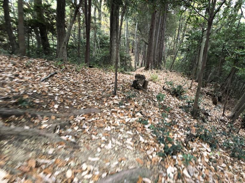日の出野鳥の森続101
