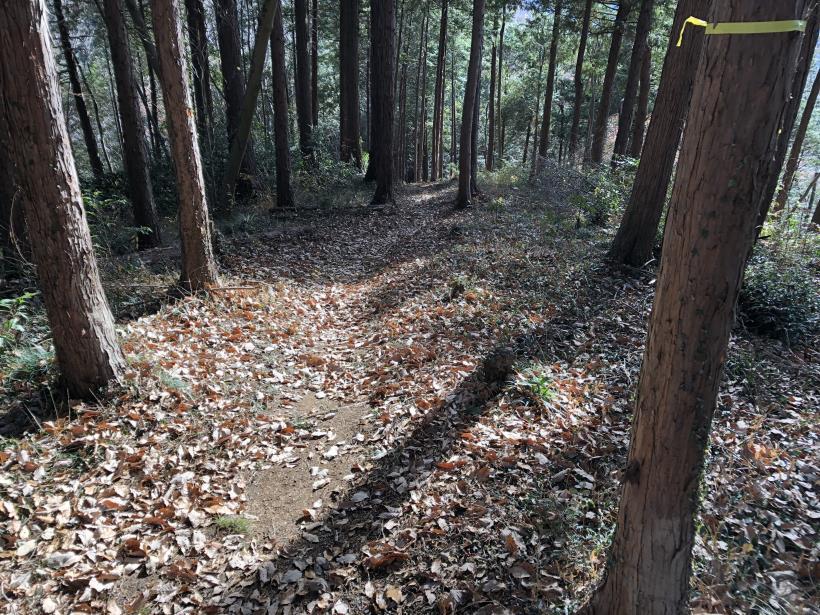 津久井堂所山84