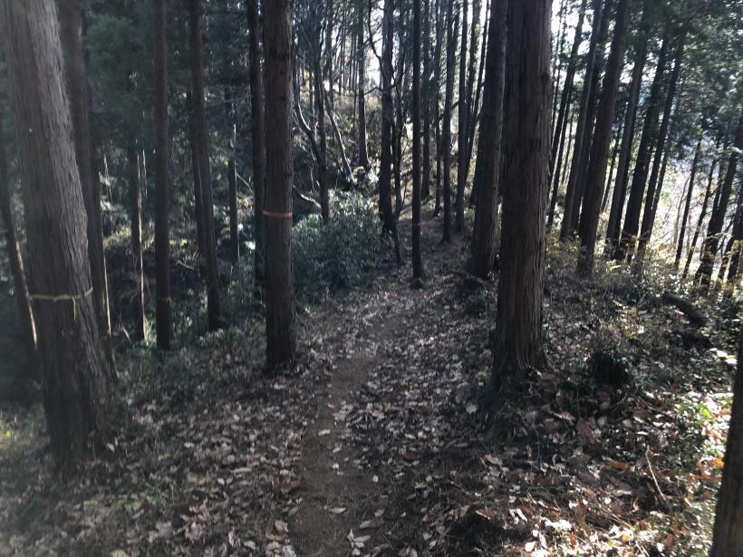 津久井堂所山86