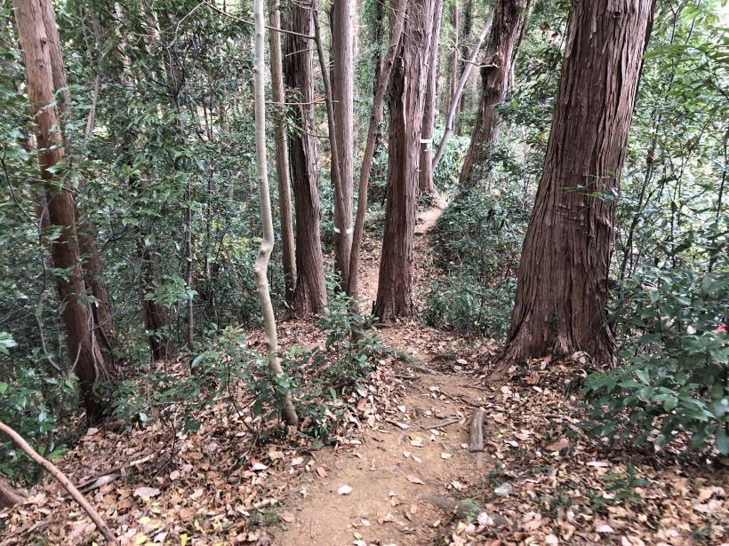 網代弁天山から高尾神社30