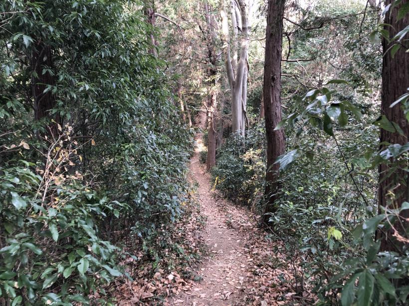 網代弁天山から高尾神社32