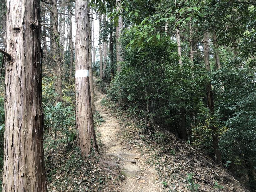 網代弁天山から高尾神社37