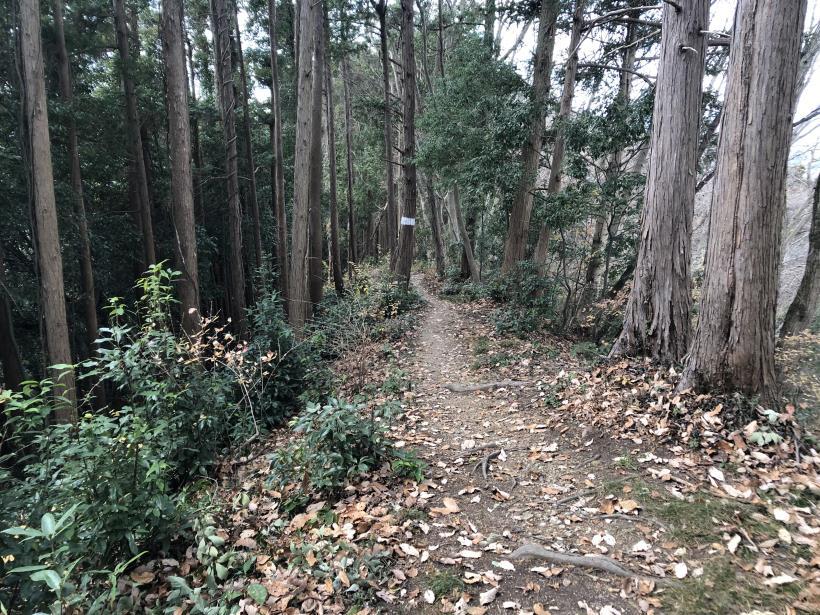 網代弁天山から高尾神社46