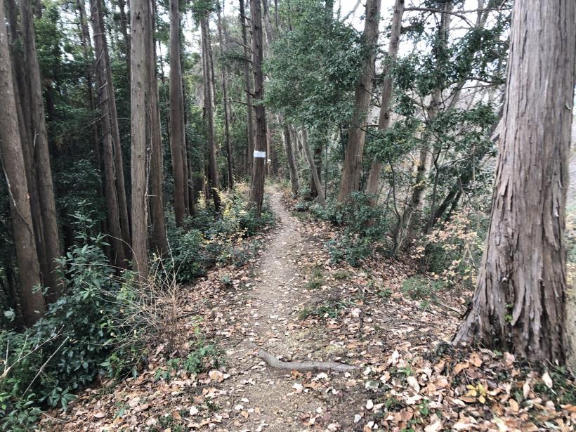 網代弁天山から高尾神社48