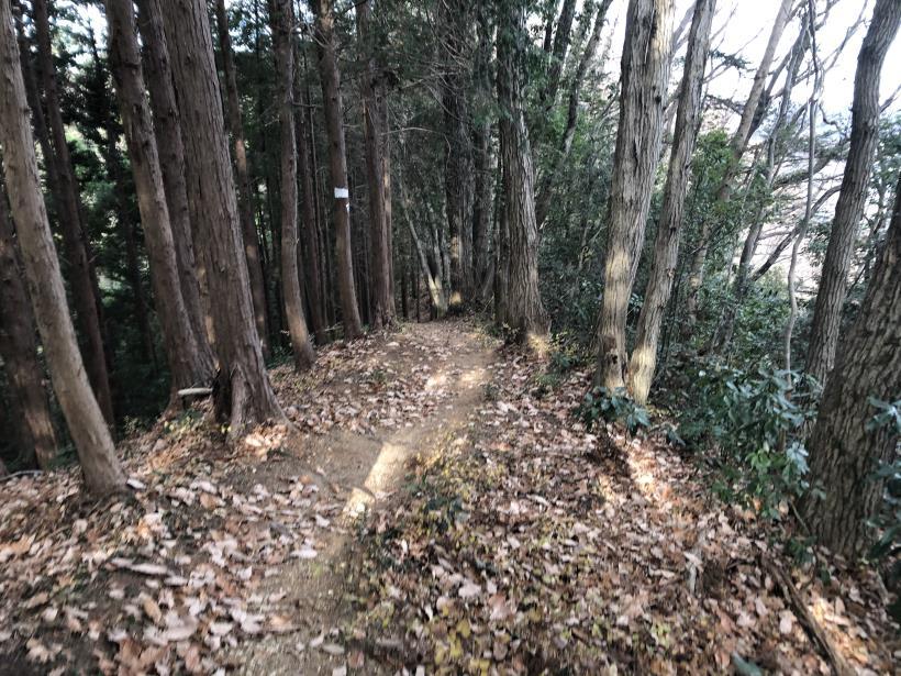網代弁天山から高尾神社49