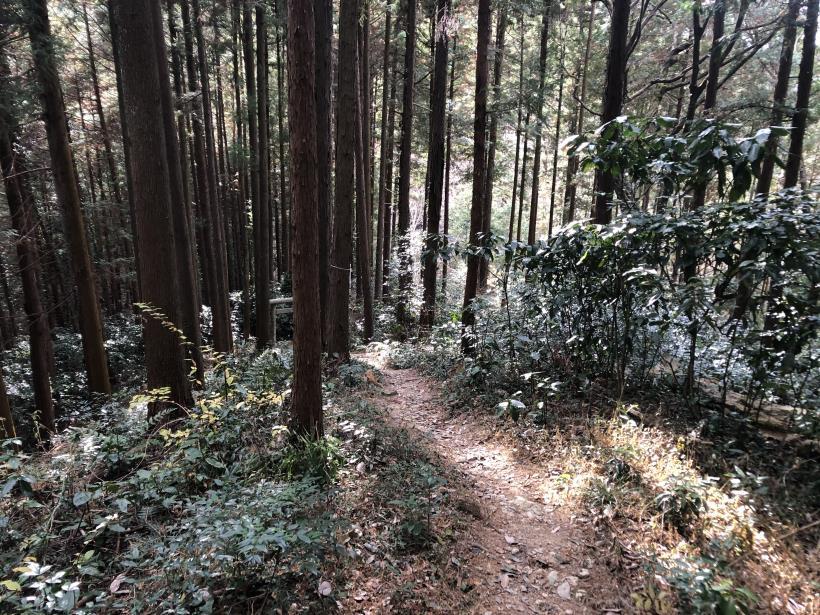 網代弁天山から高尾神社58
