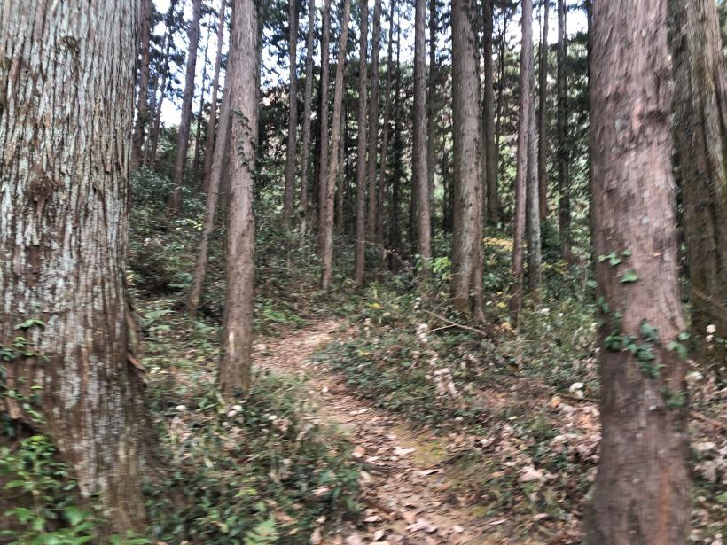 網代弁天山から高尾神社63