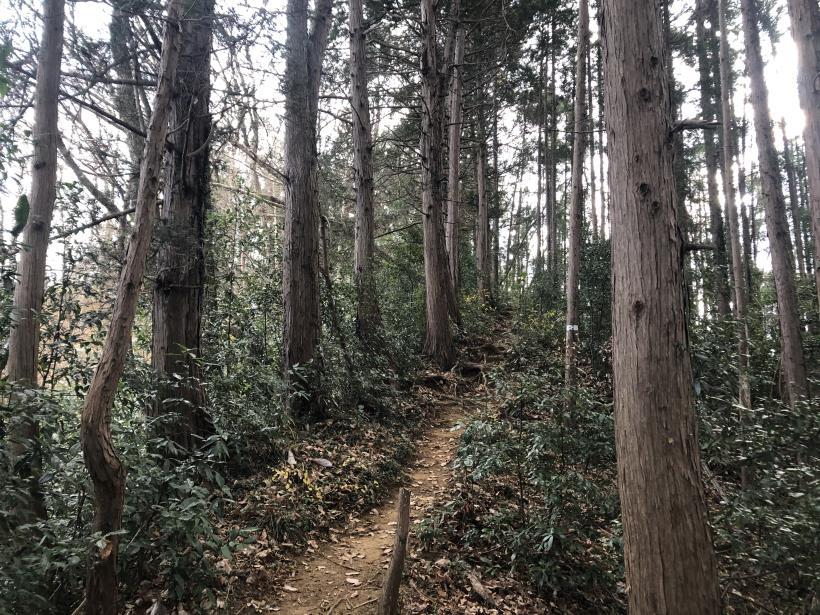網代弁天山から高尾神社79