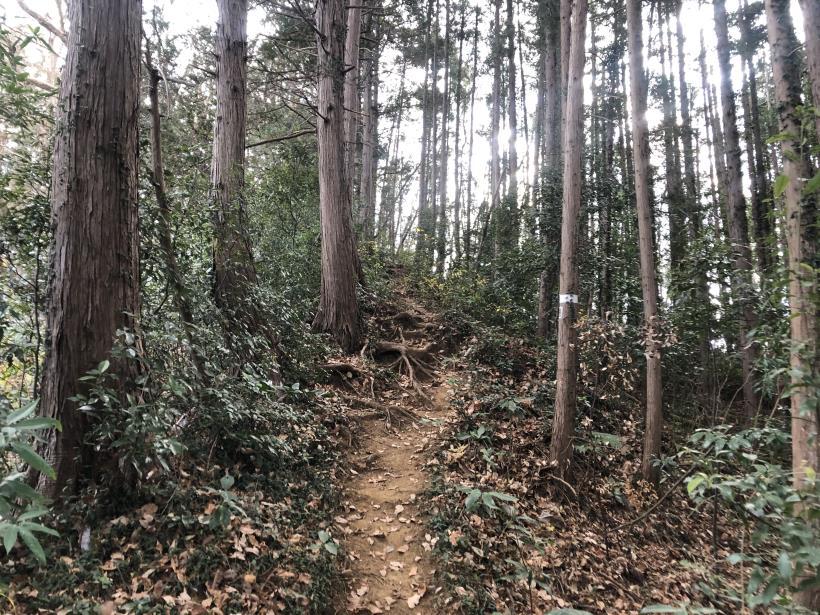 網代弁天山から高尾神社80