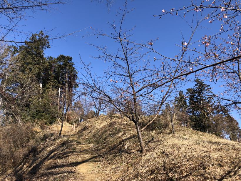 天王山ハイキングコース57