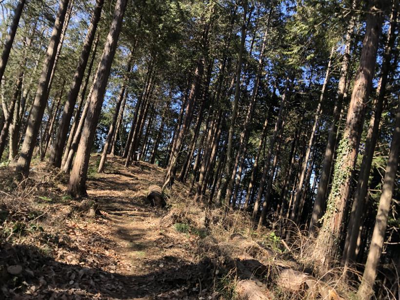 天王山ハイキングコース74
