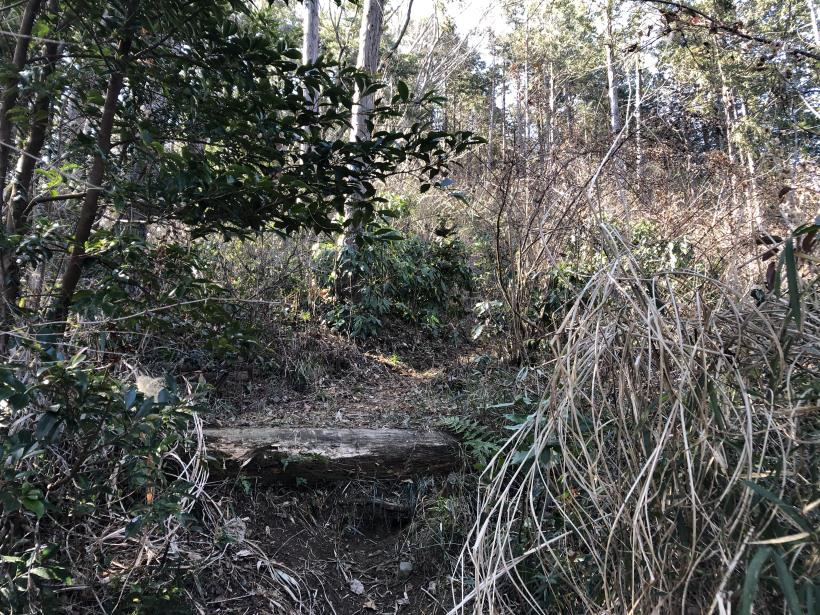 天王山ハイキングコース83