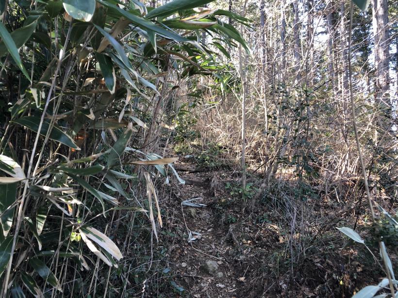 天王山ハイキングコース85