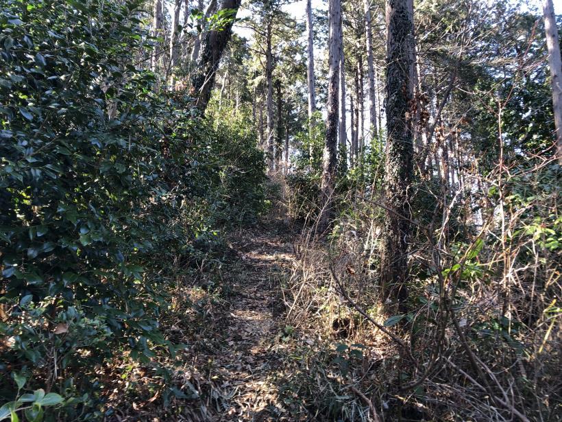 天王山ハイキングコース89