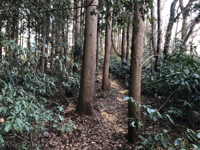 天王山ハイキングコース92