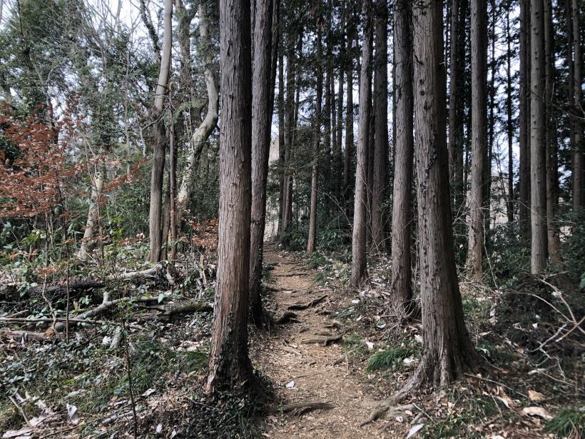 城山湖から大垂水峠へ29