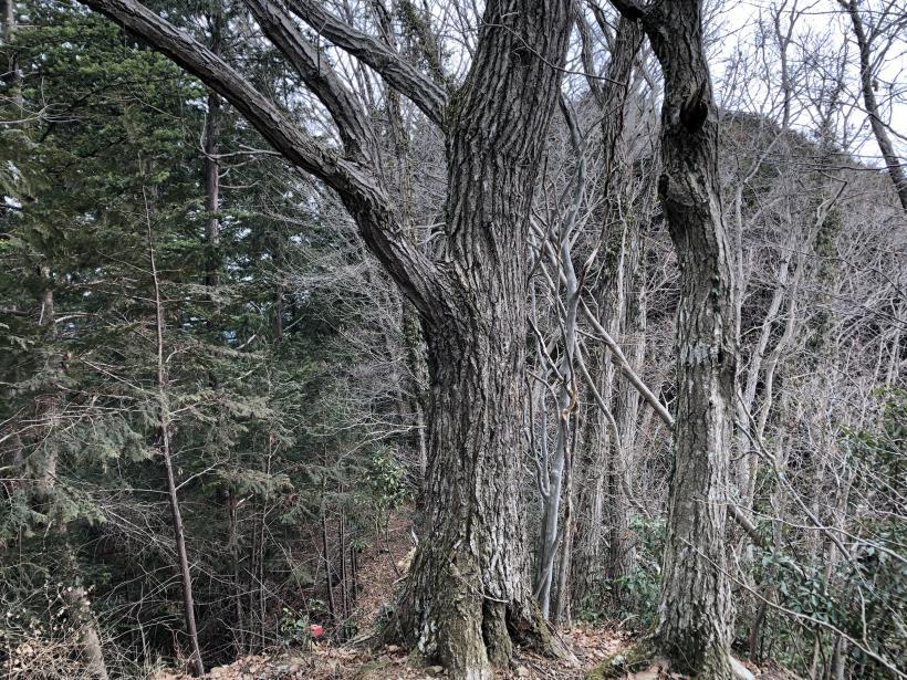 城山湖から大垂水峠へ64