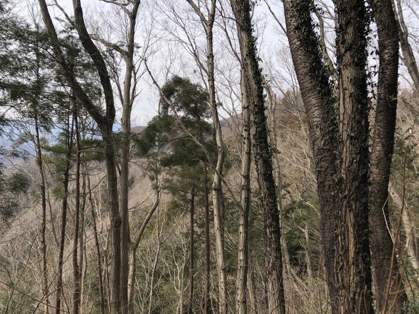 城山湖から大垂水峠へ153
