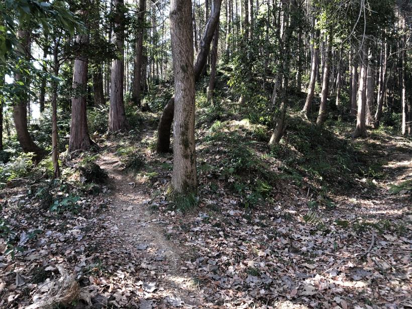 横沢入の石切り場跡21