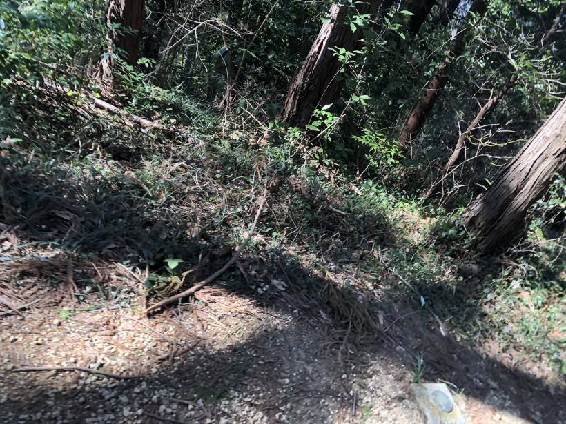 横沢入の石切り場跡49