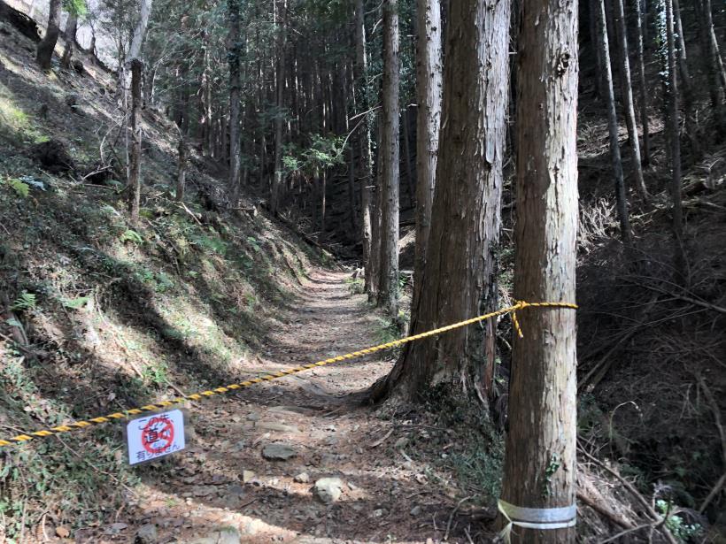 八重山(上野原)35