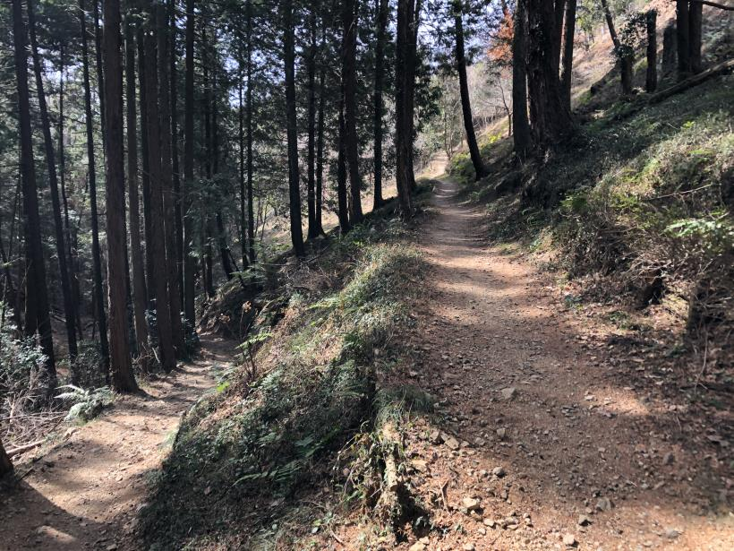 八重山(上野原)36