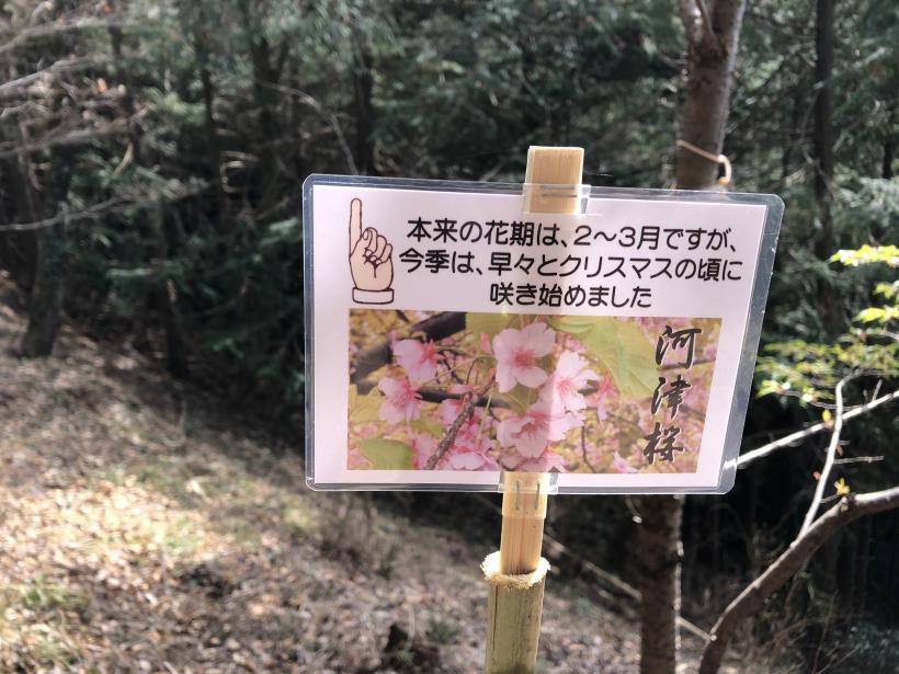 八重山(上野原)51