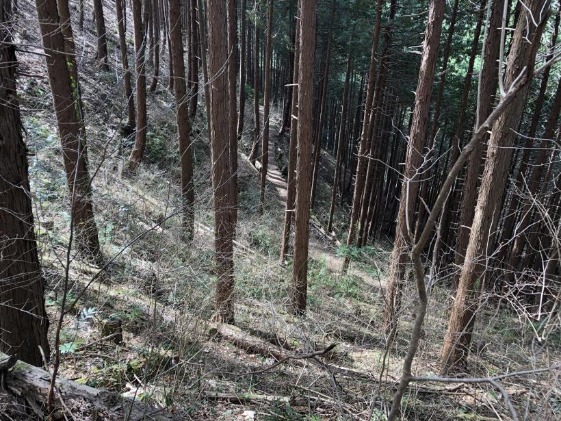 八重山(上野原)58