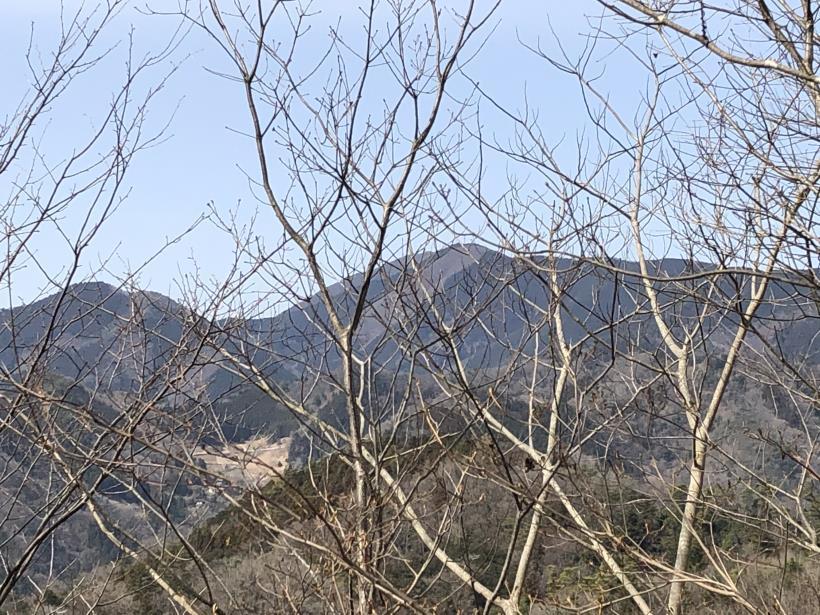 八重山(上野原)67
